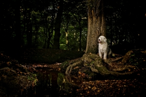 Lizzy in the woods - Colin Brister