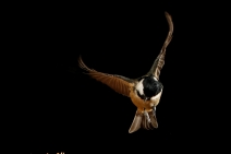 Landing - Colin Brister
